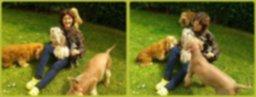 Guardería canina (Cerrada)